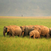 India Heritage and Wildlife Tour