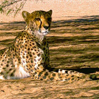 5 Day Johannesburg - Kruger National Park Tour