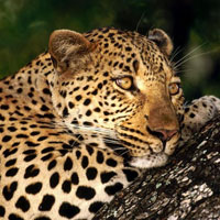8 Day Johannesburg - Kruger - Coast Tour