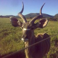 Johannesburg - Kruger Falls - Botswana Tour - 11 Days