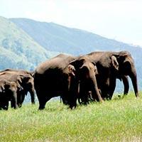 Majestic Kerala (Cochin-Munnar-Thekkady-Kumarakom-Kovalam-Trivandrum) 07 Nights & 08 Days