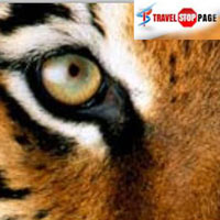 On The Footsteps Of The Tiger Package