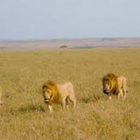 Nairobi - Amboseli - Tsavo West/east - Malindi - Mombasa Northern Coast - Nairobi Tour