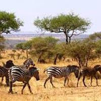 Tsavo East & Amboseli Tour
