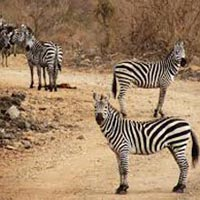 Tsavo East / Tsavo West & Amboseli National Park Tour