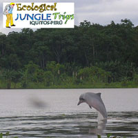 Ecological Jungle Trip - Dolphin Lodge