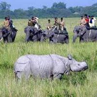 Wildlife Tour Package