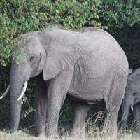 3 Days 2 Nights Kenya Meru National Park Safari