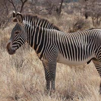 3 Days and 2 Nights Kenya Samburu Tour