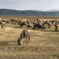 Arusha, Manyara, Serengeti & Ngorongoro Safari