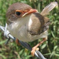 Bird Watchers Paradise Safari 8 Days Tour