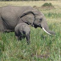 3 Days Mara joining budget safari Tour