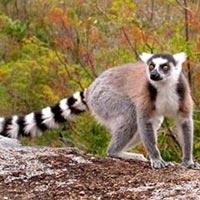 Meet in Madagascar Tour