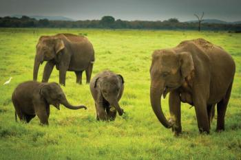 Classical Wildlife Adventure Tour Package