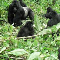 3 Days Rwanda Gorillas Tour