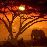 19 Days Kenya - Tanzania Best Wildlife Lodge Safari - Rwanda Gorilla Tracking Tour