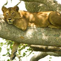 8 Days Tanzania Migration Safari Tour