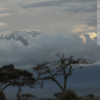 5 Days Selous and Mikumi Safari Tour