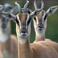 4 Days Lake Manyara - Ngorongoro - Tarangire Wildlife Tour
