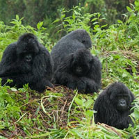 Kenya - Tanzania best wildlife lodge - Uganda Gorilla safari Tour