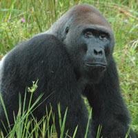 13 Day Kenya - Tanzania Wildlife Safari - Rwanda Gor...
