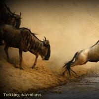 4 Days 3 Nights Mara Wildebeest Migration Safari Package
