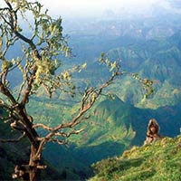 "Hiking in the Simien Mountains- ""Roof of Africa"""
