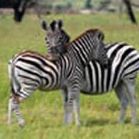 Uganda Hotspots Wildlife And Gorilla Safari-15 Days Package
