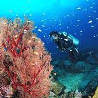 Port Blair - Baratang - Havelock Island Tour
