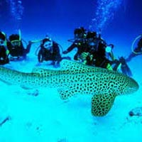 Port Blair - Havelock Island - Neil Island Tour