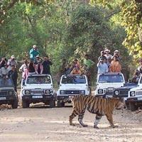 Panchmarhi - Jabalpur - Bheda Ghat - Kanha Wild Life Tour
