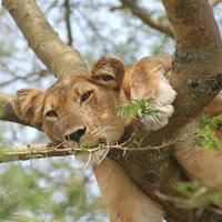 Wildlife and Lake Mburo Tour