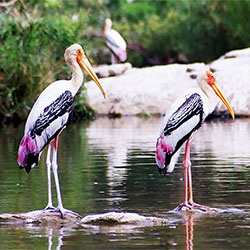 Top Tourist Places To Visit in Bharatpur