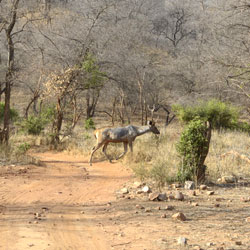 Sariska Travel Guide
