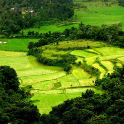Top Tourist Places To Visit in Coorg