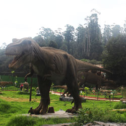 Top Tourist Places To Visit in Ooty