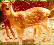 Simbalbara Sanctuary