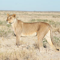 Top Tourist Places To Visit in Northwestern Namibia