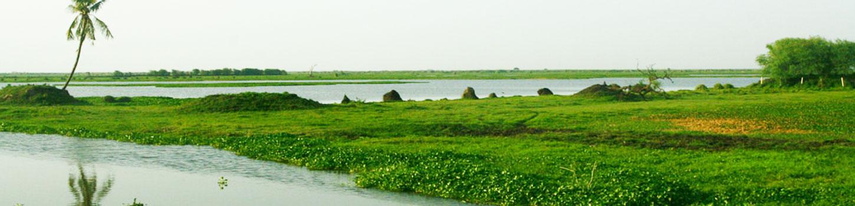 Kolleru Lake